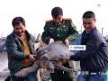 长乐渔民放生重50多公斤海龟 据推算已百岁